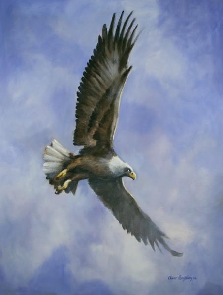 Adler - Soaring - See (Druck limitiert)