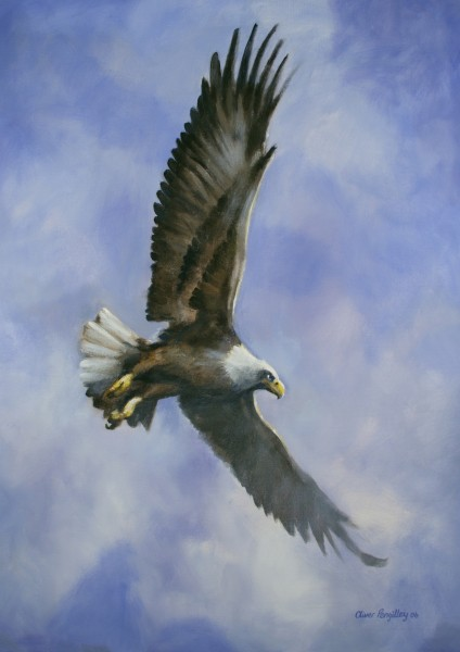 Soar and See